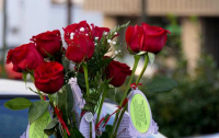 Red_Rose_Rescue_roses_645_406_55